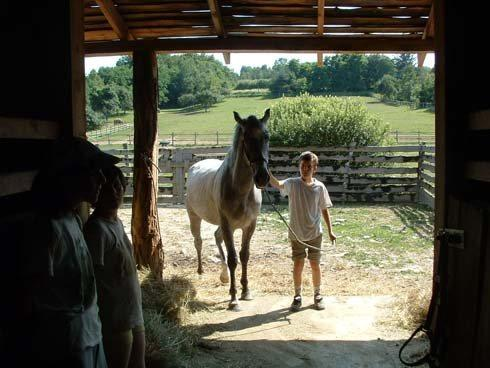 Magyarszombatfa, lovastanya